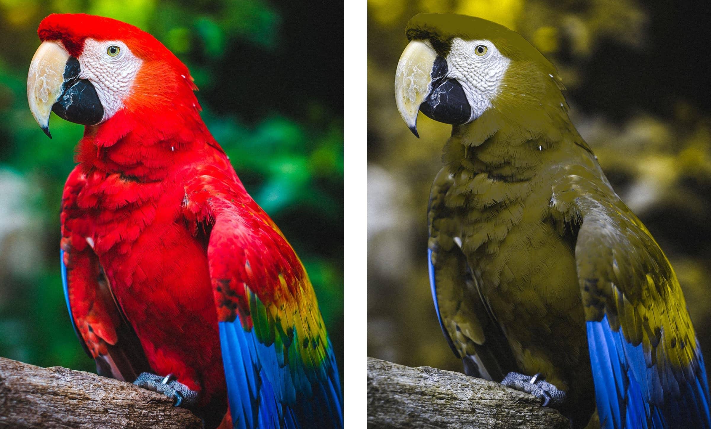 Rot-Grün-Schwäche Bilder Papagei